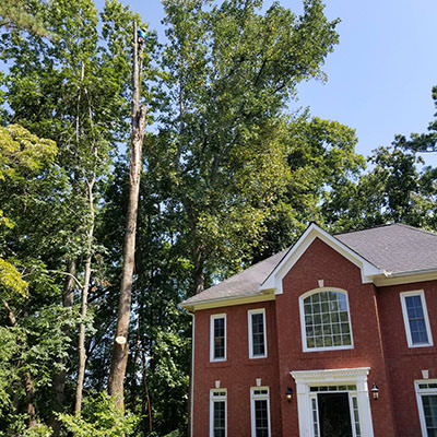 Marietta and Roswell Tree Removal Service