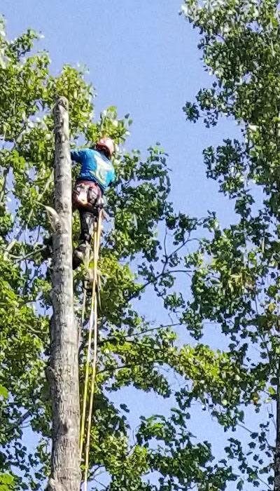 Acworth, Dallas and Woodstock Tree Removal Service